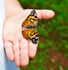 Monarch butterfly in a person's open hand, symbolizing trust.