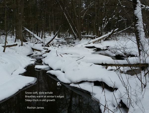 """""""Sleep-thick"""" poetry by Roshan James, Wellesley, Ontario, Canada"""