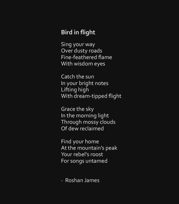 """Bird in flight"" - poetry by Roshan James, Wellesley, Ontario, Canada"